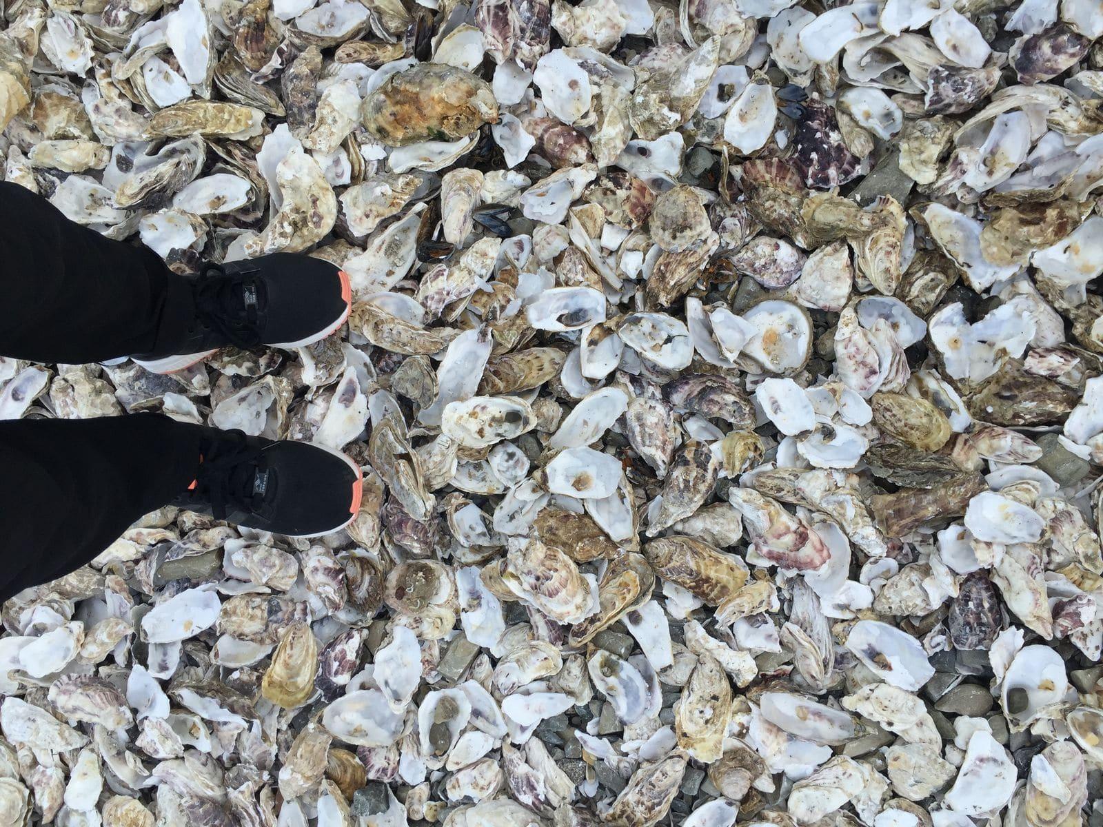 camminare su gusci di ostriche