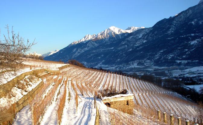 vigne innevate valle d'aosta