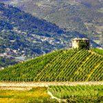 Vigneti Valle D'Aosta