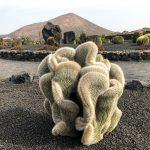 Il giardino di cactus della Bodegas El Grifo
