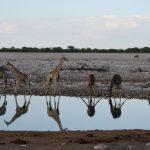 Capodanno al caldo in Namibia