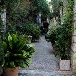 La strada piena di piante di Saint Paul De Vence