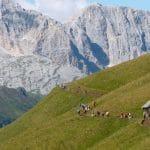 Trekking in Italia - Sassolungo Val Gardena