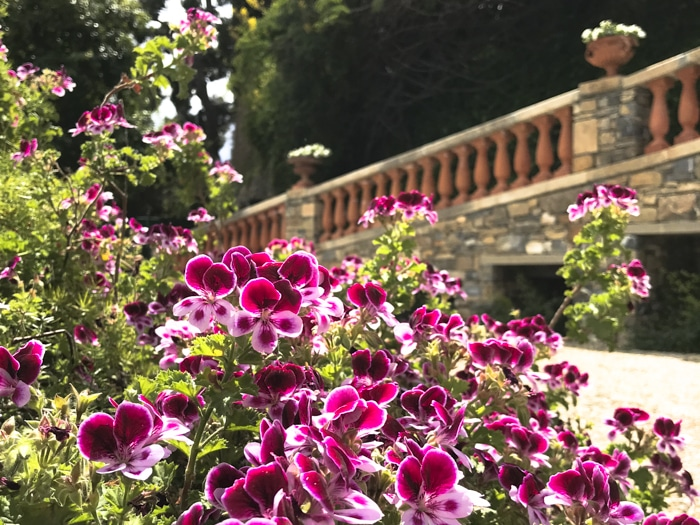 Giardini della Pergola Alassio