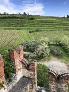 Vista sui vitigni dal castello di Soave