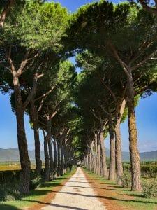 Donna Olimpia: il viale di ingresso