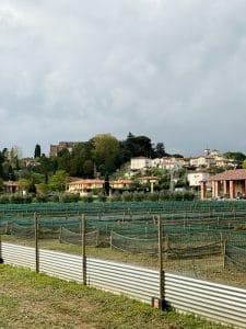 Weekend gastronomico in Valdera: visita ad Arcenni Tuscany