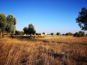 Il paesaggio intorno alla Masseria Pantaleo
