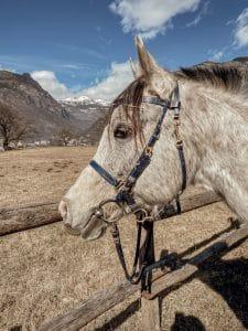 Muso di un cavallo maculato