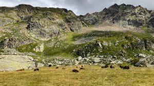 Il paesaggio dell'Alpe Pedriola