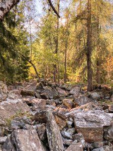 Il bosco d larici