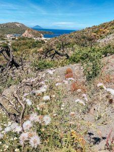 La vegetazione sul Vulcano