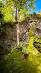 Muschi e alberi spuntano dalle rocce