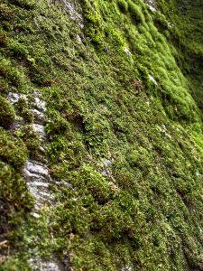 Il muschio sulle parete di roccia