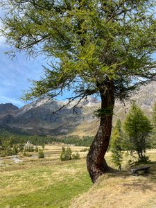 Paesaggi da Montana